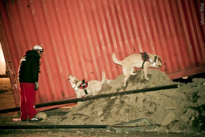 Fotos destacadas, simulacro de sismo ,rescate canino
