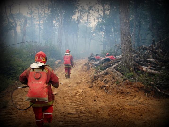Incendio forestal año 2008