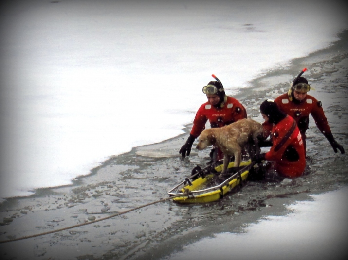 Rescate de can en agua gélidas